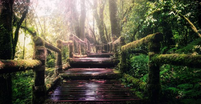 Stairs going through a jungle.