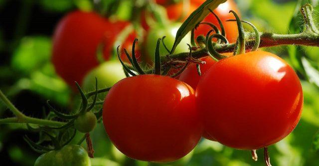Grow a tomato plant.