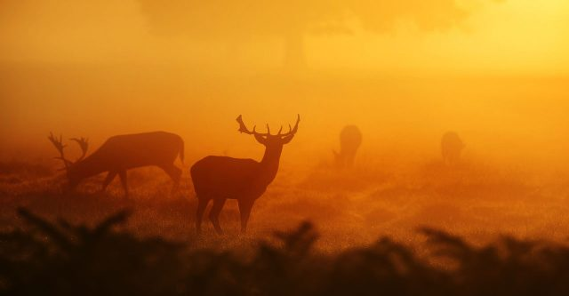 Deer standing in a field.
