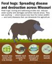 Feral hog damage. (Photo by Missouri Department of Conservation)