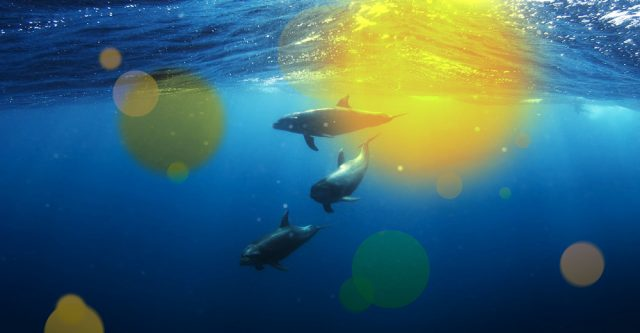 Dolphins in ocean.