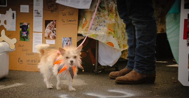 Even the dog is dressed up for the festival.