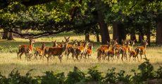 Deer standing in a field.