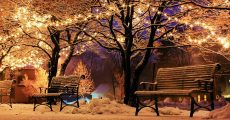 Christmas lights in snowy park.