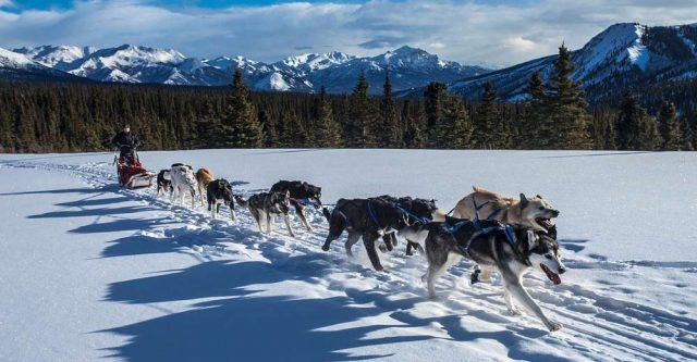 Husky dogs in snow pulling a sled.