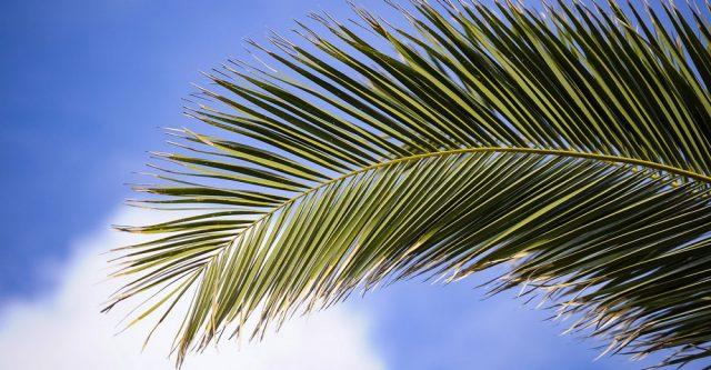 Palm branch in sky.