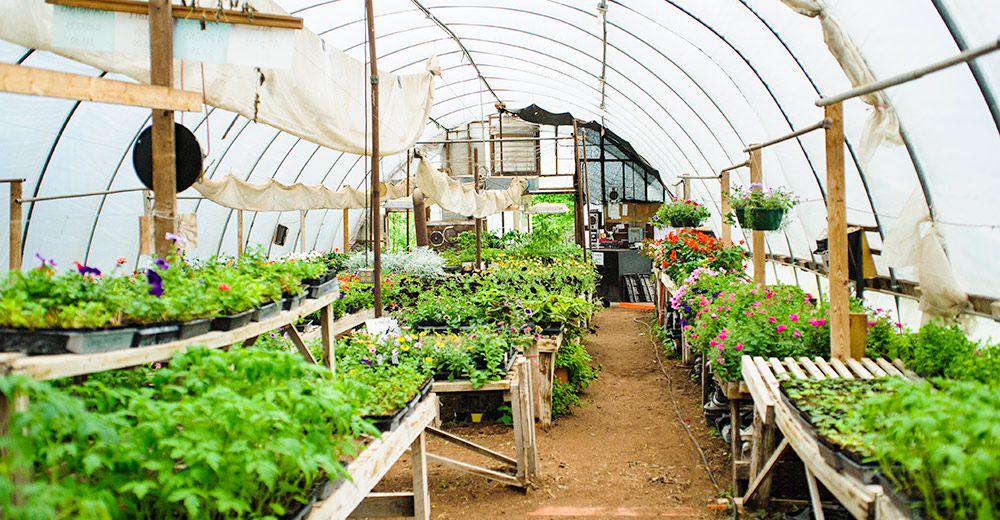 Rows of flowers and vegetables at OutBack Greenhouse.