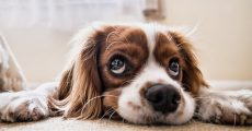 Sad dog face.