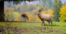 Two deer in a firld