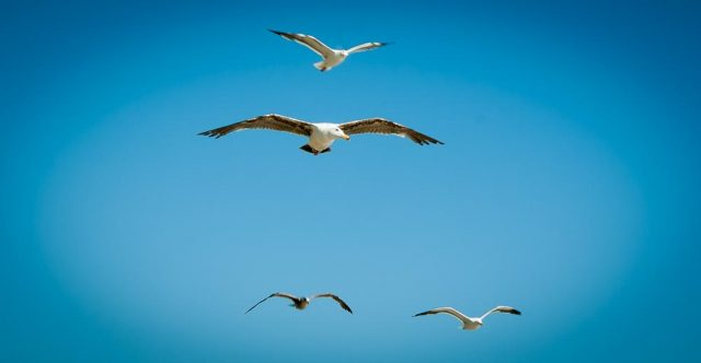 Seagulls flying in the sky.