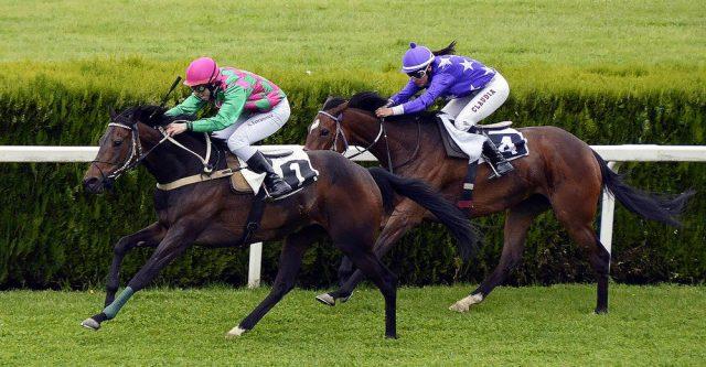 Horses running a race.