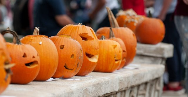 Pumpkins lined up to be judged for the Pumpkin carving contest on October 2, 2021 at Alton, Mo.